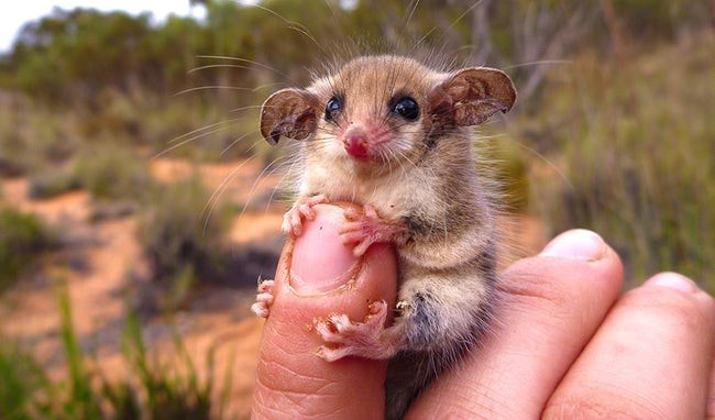 tiny animals on finger