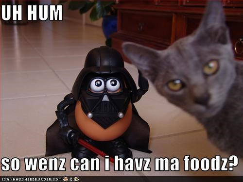 Cheezburger Image 3735296512
