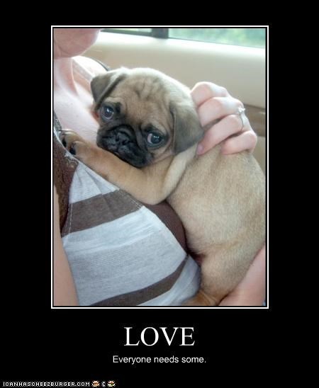 LOVE Everyone needs some.