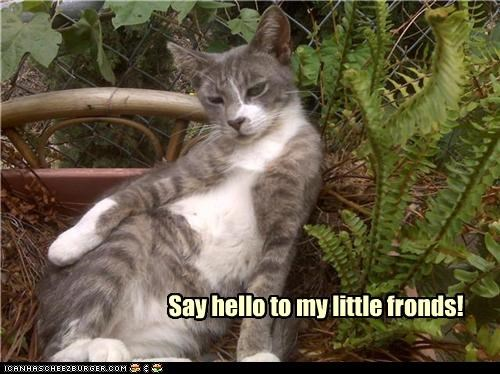 caption captioned cat cocky friends fronds pun scarface threat - 3736128768