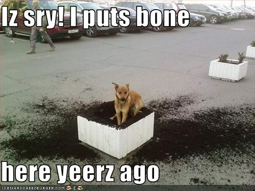 Iz sry! I puts bone   here yeerz ago