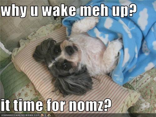 blanket mixed breed sleeping - 3738039808