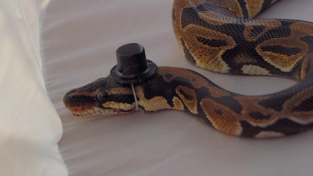 snakes hat - 37381
