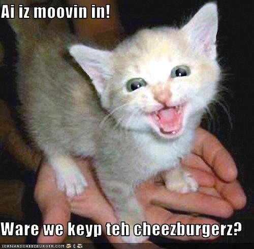 Cheezburger Image 3739953664