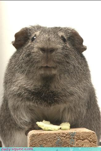 Americas Next Top Model guinea pig nerd jokes - 3740904960