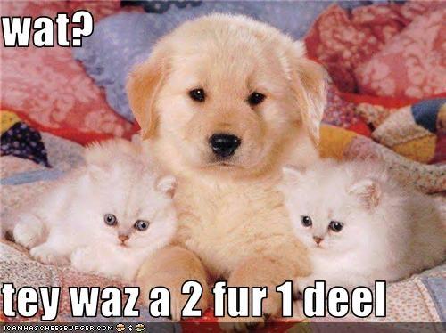 deal golden retriever kitten puppy - 3741748480