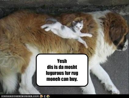 cat Cats dogs Interspecies Love luxury money rug rugs st bernard