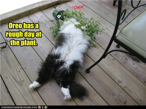 caption,captioned,cat,day,double meaning,knocked out,pain,plant,pun,rough