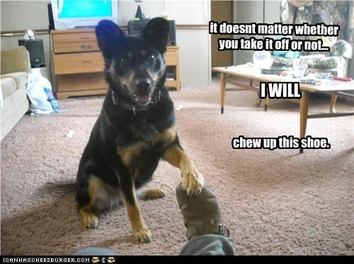 chew,german shepherd,shoe,threat