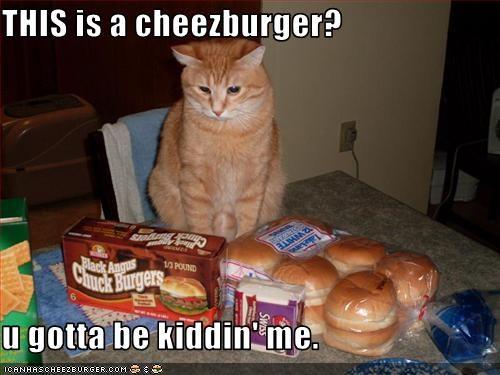 Cheezburger Image 3742534144
