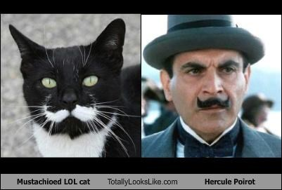animals Cats david suchet Hall of Fame hercule poirot lolcats mustache - 3742600192