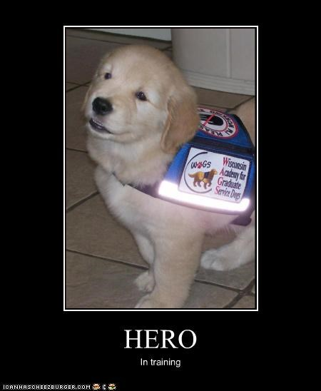 adorable Hall of Fame heroic labrador puppy service dogs - 3744119296