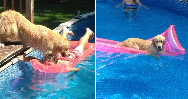 More FAILs and WINs From Animals Who Are Jerks