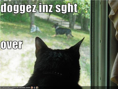 Cheezburger Image 3744657664