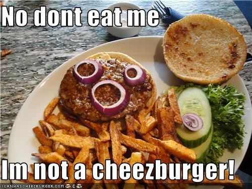 Cheezburger Image 3744840448