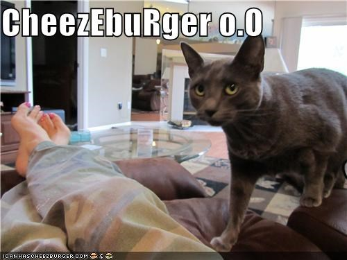 Cheezburger Image 3745644032