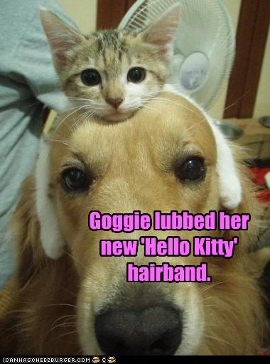 Goggie lubbed her new 'Hello Kitty' hairband.