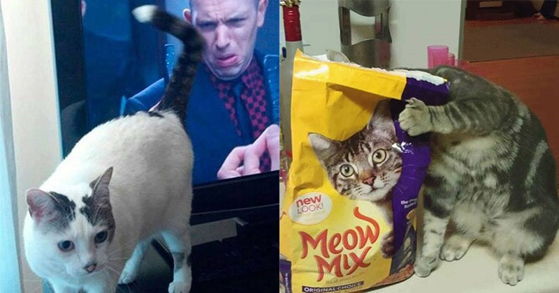 precision de gatos