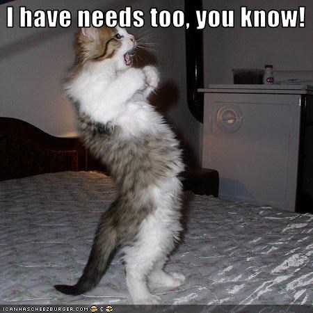 angry caption captioned cat fyi have I kitten needs shouting standing too upset you know - 3746737152