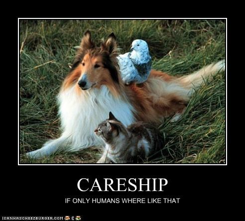 CARESHIP IF ONLY HUMANS WHERE LIKE THAT