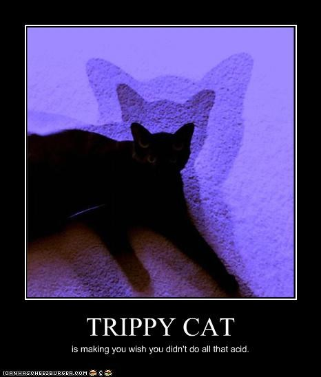 TRIPPY CAT is making you wish you didn't do all that acid.