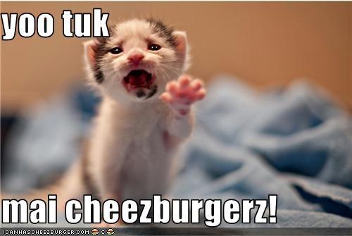 Cheezburger Image 3747492864