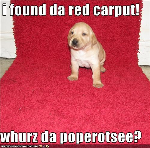 papparazzi puppy red carpet - 3747573248