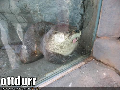 animal critters dawwww otter