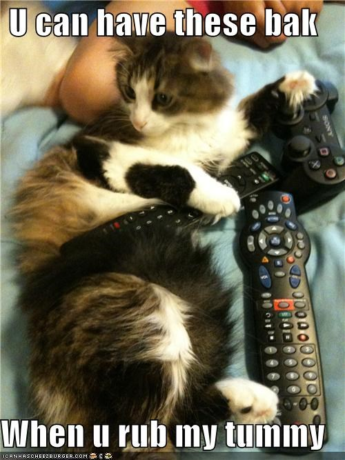 bellyrub,remotes,thief