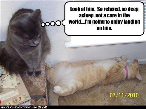 caption nap oh noes plotting - 3747939584