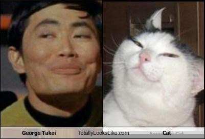 Cats,george takei,lolcats,Star Trek