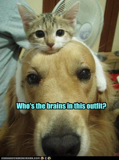 cute,kitten,loldogs,smart