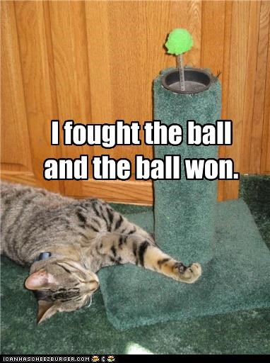 ball caption captioned cat defeat fight fighting fought i fought the law lost lyric lyrics parody song the clash won - 3748729344