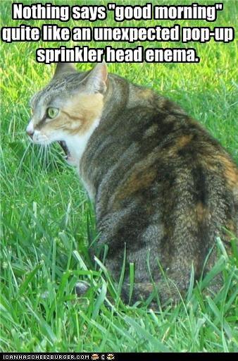caption captioned cat good morning Hall of Fame shocked sprinkler sprinkler head surprise - 3748736512