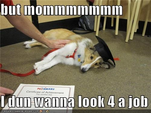 border collie,diploma,job,school
