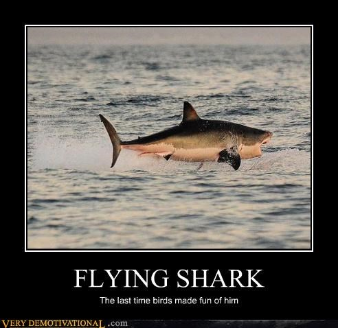 danger,flying sharks,help,im-a-shark,sharks,Terrifying,wtf