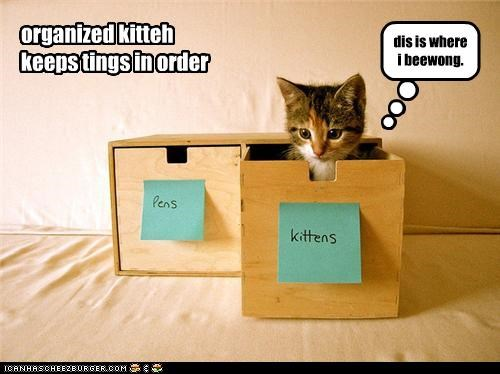 cute kitten ocd organize - 3750258432