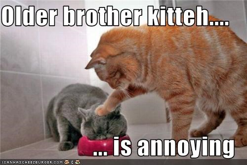 Older brother kitteh....  ... is annoying