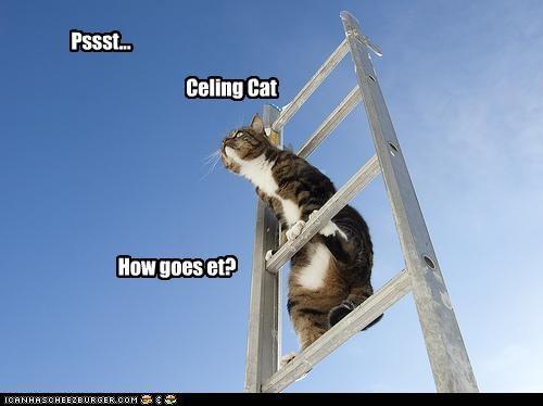 ceiling cat ladder o hai - 3751533312