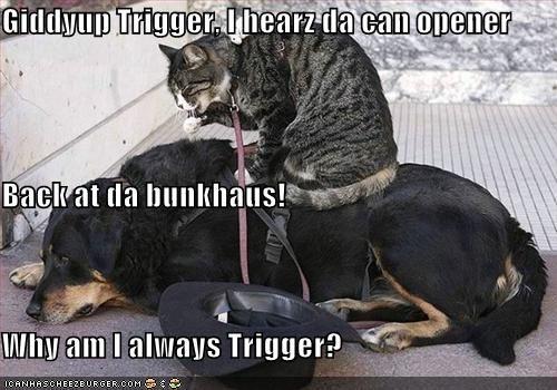 Cheezburger Image 3752533248