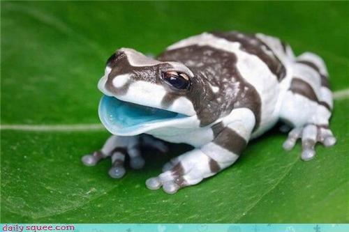 frog photoshop Whastsit - 3753432576