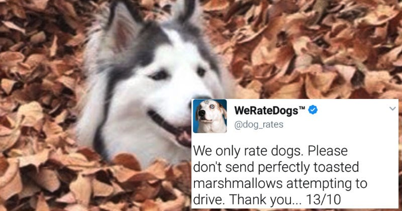 Funny and entertaining tweets that left us laughing from WeRateDogs Twitter account.