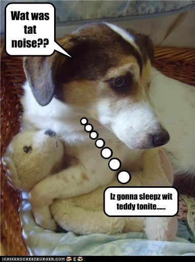 Wat was tat noise?? Iz gonna sleepz wit teddy tonite......