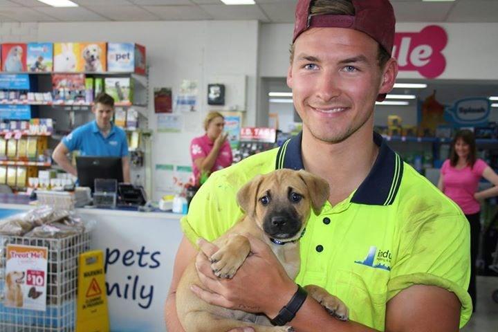 dogs adoption list puppy handsome - 375557