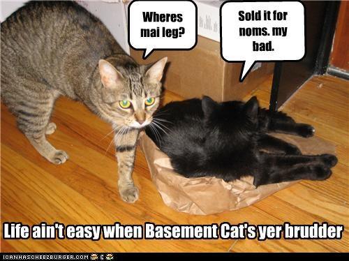 annoying bad cat basement cat leg oh noes - 3755819008