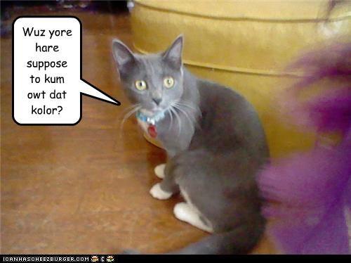 asking caption captioned cat color hair purple question shocked - 3758827520