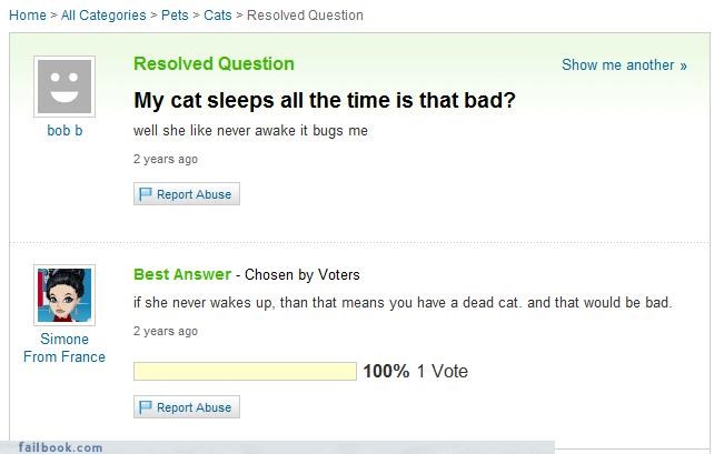 cat,dead,poke it with a stick,sleeping,Yahoo Answer Fails