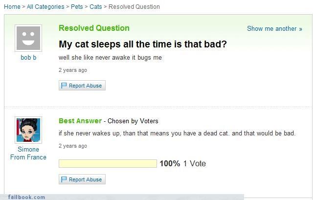 cat dead sleeping Yahoo Answer Fails - 3759862784