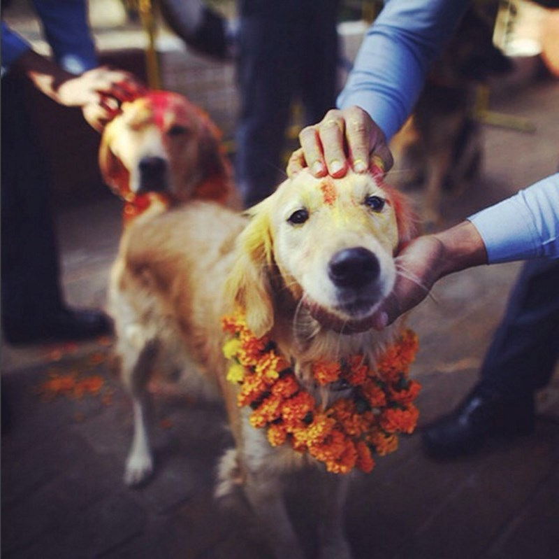 annual festival in Nepal Worships Dogs