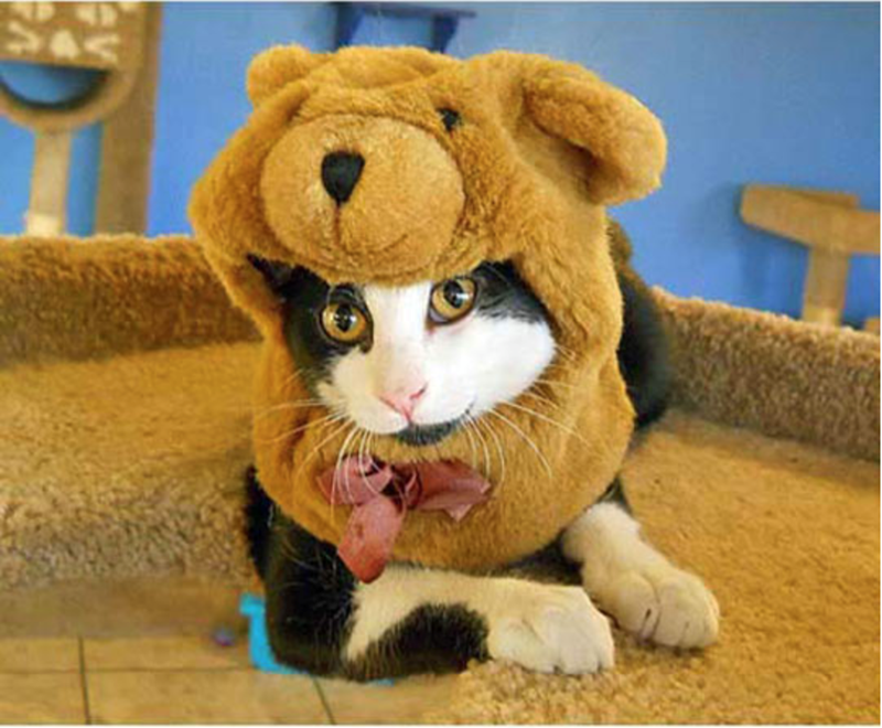 funny cats wearing different animal hats